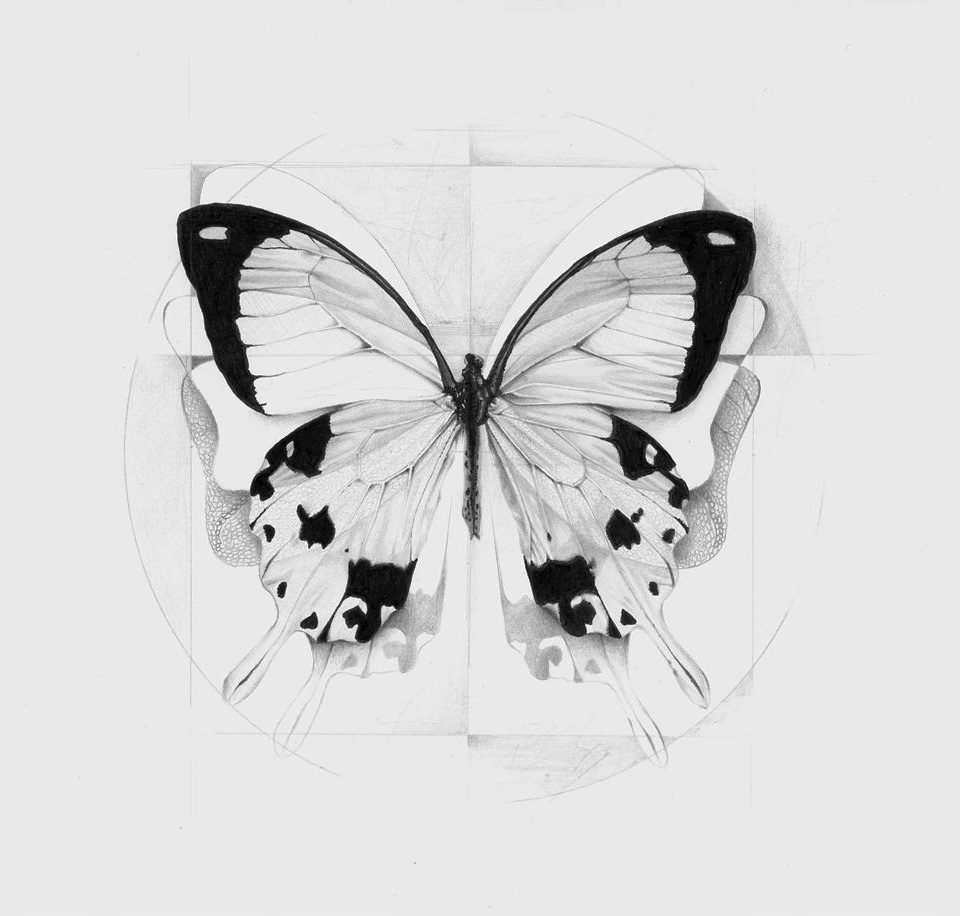 alessia_sinpoli_batterfly_pencil_drawing_realism_mini