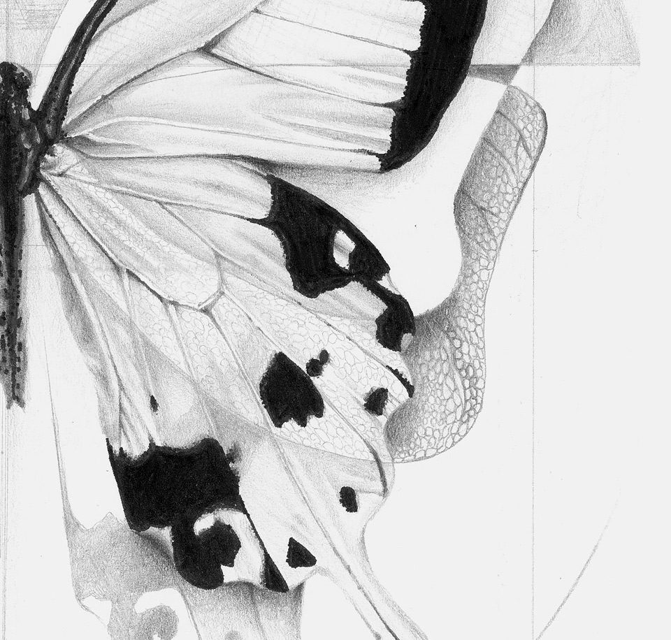 deatil1_alessia_sinpoli_batterfly_pencil_drawing_realism
