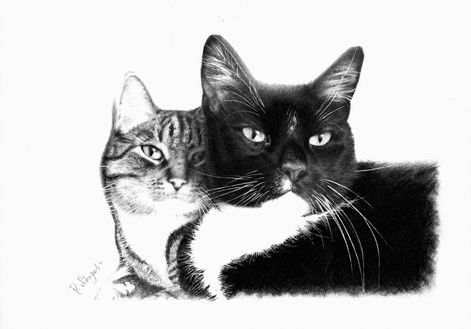 sinopoli_pencil_realism_cats1