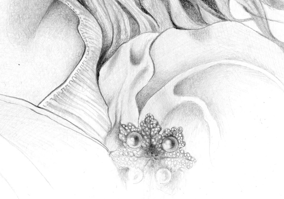 wp-alessia_sinpoli_innamoratadetail2_pencil_drawing_realism_mini copy